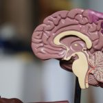 What Are The Facts About Wet Brain Symptoms?